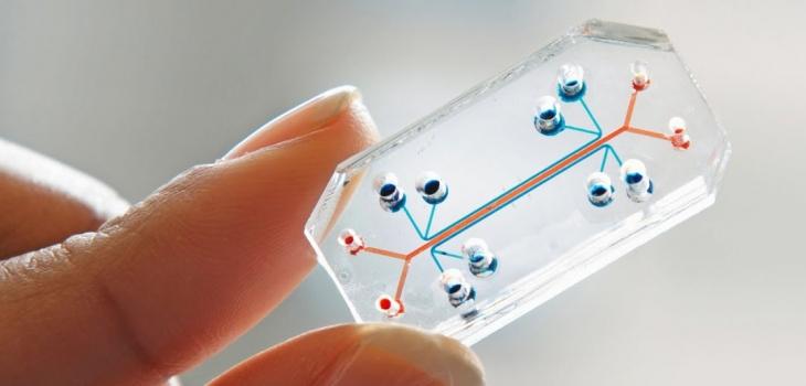 Ученые смогли создать искусственный зуб на чипе